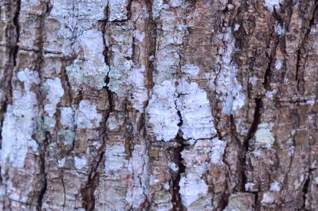 Background, texture of horizontal bark broke Reklamní fotografie