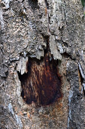 Background, texture of horizontal bark broke with a hole