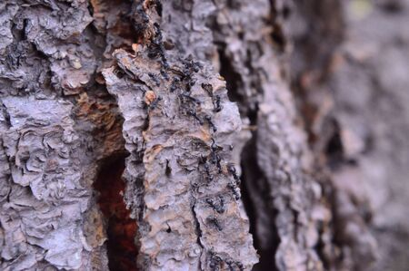 Background, texture of horizontal bark broke 스톡 콘텐츠