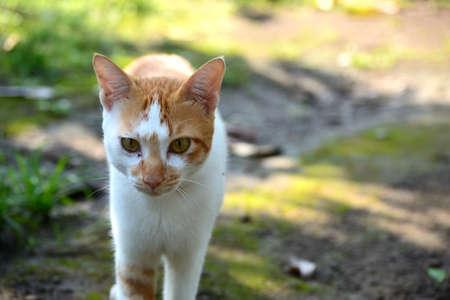 cute domestic cats are orange and white