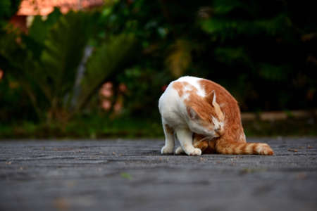 Cute domestic cats the color are orange and white