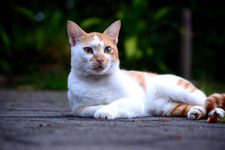 Cute domestic cats the color are orange and white