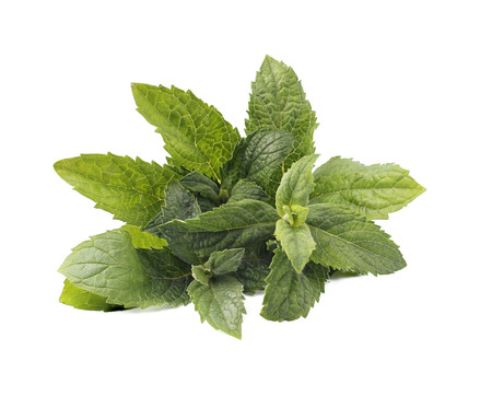 standalone: mint leaves on a stand-alone