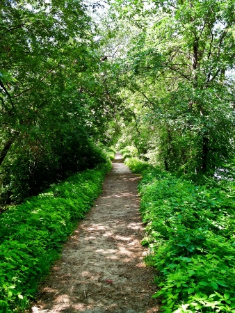 road and path through: Walking path that passes through the thickets of greenery
