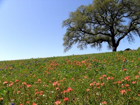 Texas wildflowers Stok Fotoğraf