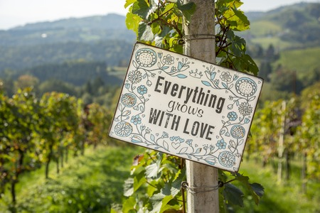 Close up of ripe red grapes with inscription - Everything grows with love, ready for autumn harvest in south Styria-Austria.