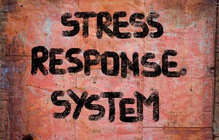 hipofisis: El estr�s Concepto del Sistema de Respuesta