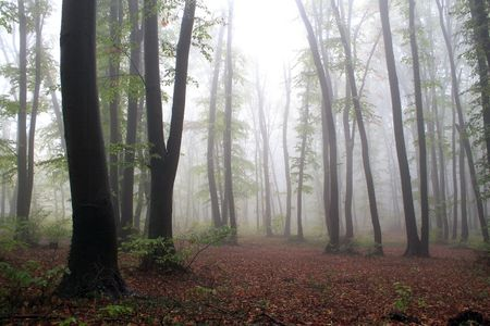 Colorful misty early morning forest Stock Photo