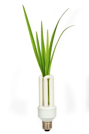 Energy saving lamp with green seedling on white Stock Photo