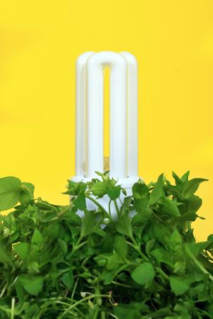 alternatively: Energy saving lamp with green seedlings of yellow