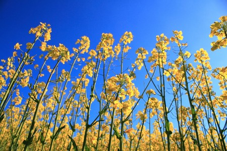 yellow herb under blue sky close-up photo