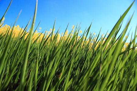 Grass under the blue sky close-up