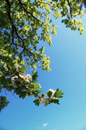 Spring trees and blue sky background Stock Photo