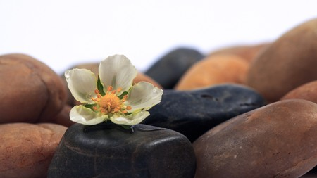 flowers and stones on a white background