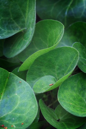 fresh green leaves close-up Stock Photo