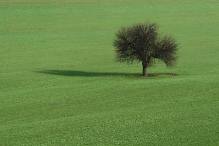Lone tree on green field