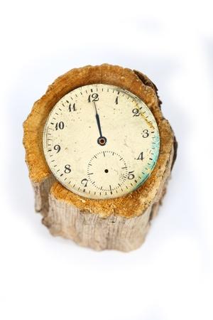 pocket watch on a cut tree