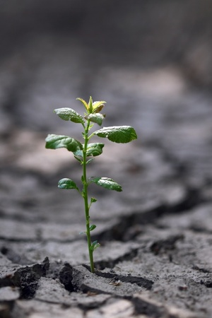 Small green sprout in the dry cracked soil  photo