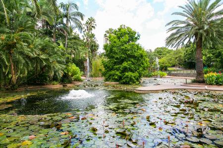 ブリスベンシ ティー植物園、ブリスベン、オーストラリア