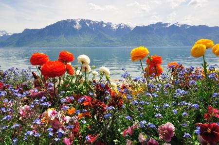 花とスイスの山 写真素材