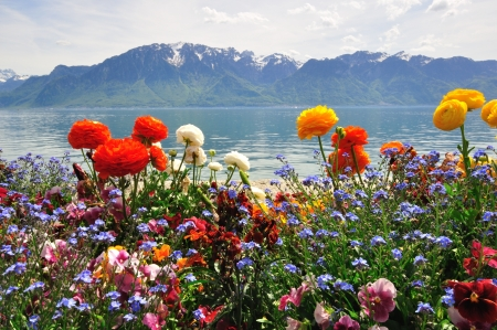 Flowers and mountains in Switzerland photo