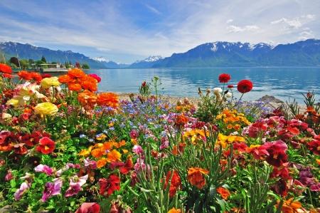 スイス アルプス、ヴェヴェイ港の花 写真素材