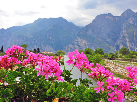 Flowers and mountains on Garda lake
