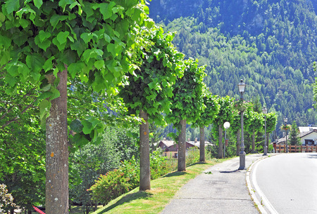 shady: Shady alley with trees