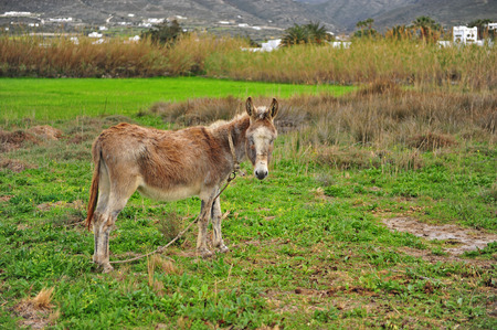 Little donkey standing in the field