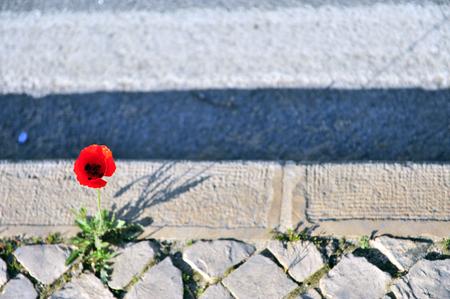 Growing flower between sidewalk and asphalt road