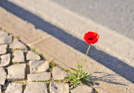 Beautifuness of lonely red flower growing in big city Фото со стока