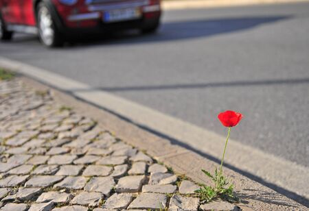 Red poppy flower and red modern car on background, urban scene