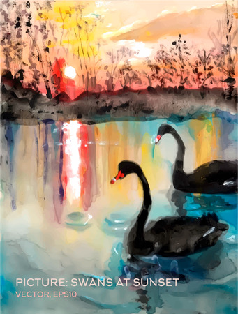 Swans in a pond at sunset, vector version of oil paintings on silks