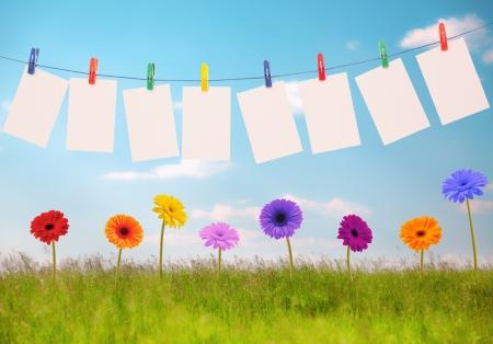 Fotografie na laně a květiny