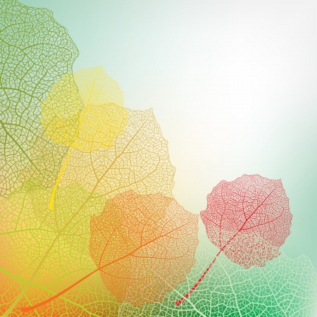 autumn colour: Autumn background from colour leaves Stock Photo