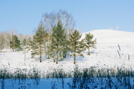 hillock: Winter, pines on a hillock Stock Photo