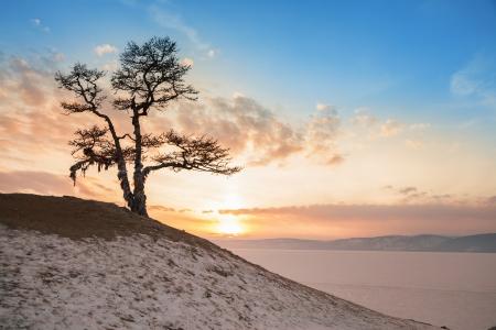 Shaman tree of lake Baikal Stock Photo