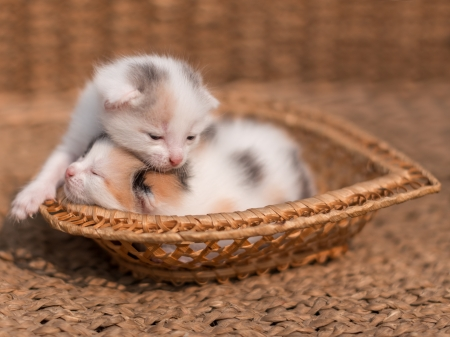 Two newborn kitten sleeping  photo