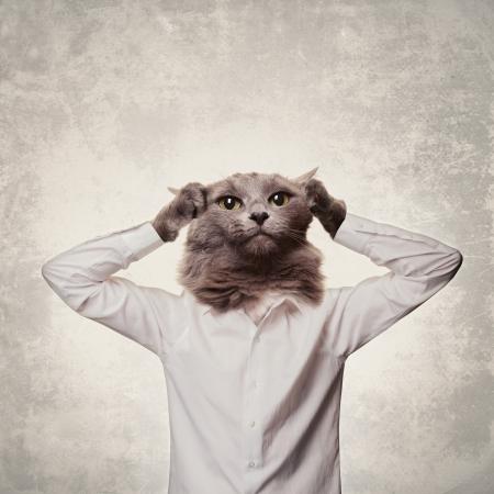 Paniquer affaires collage de chat sur un fond gris Banque d'images - 24733726