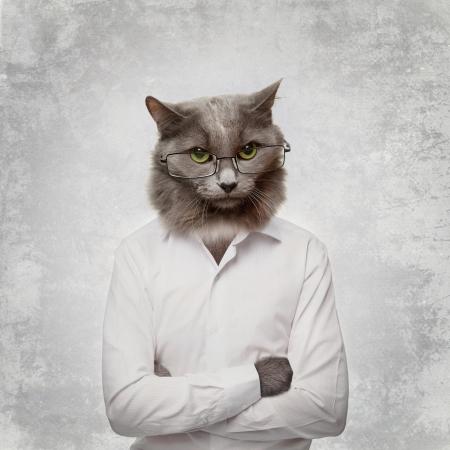 Drôle de chat pelucheux dans un homme d'affaires collage des verres sur un gris Banque d'images - 24732928