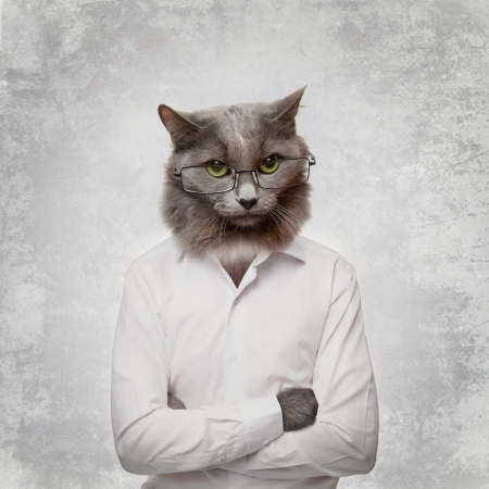 Funny fluffy cat in a glasses businessman  collage on a grey