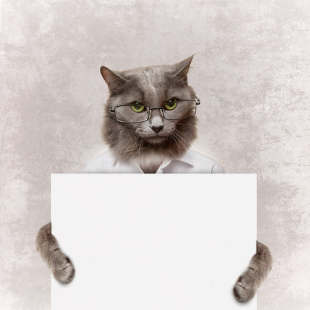 cat holding a white banner on a grey