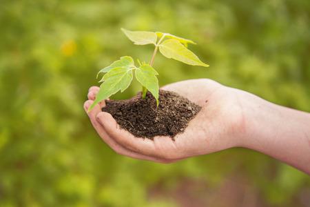 mains de garçon tenant jeune plante contre le ressort sur fond vert Concept de l'écologie