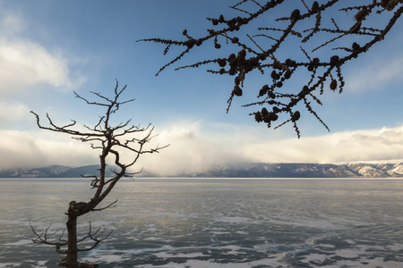 Winter Baikal, a dead tree on the shore of Olkhon photo