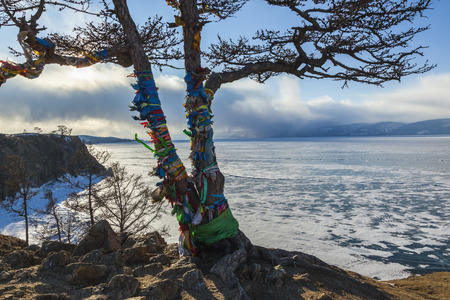 Tree of desires on cape Burhan of Olkhon Island on Lake Baikal, Russia photo