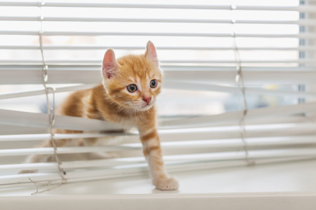 Red kitten tangled in window blinds