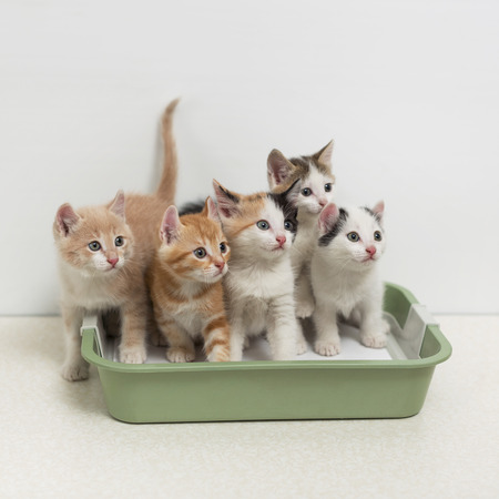 Little kittens sitting in cat toilet