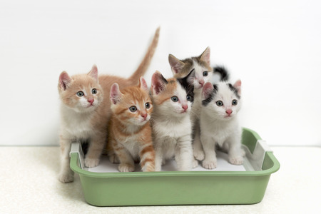 Little kittens sitting in cat toilet