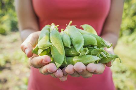 légumes vert: Été dans les paumes: cosses de petits pois dans les mains des femmes