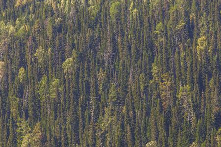 steep: Autumn trees on a steep hillside, natural background